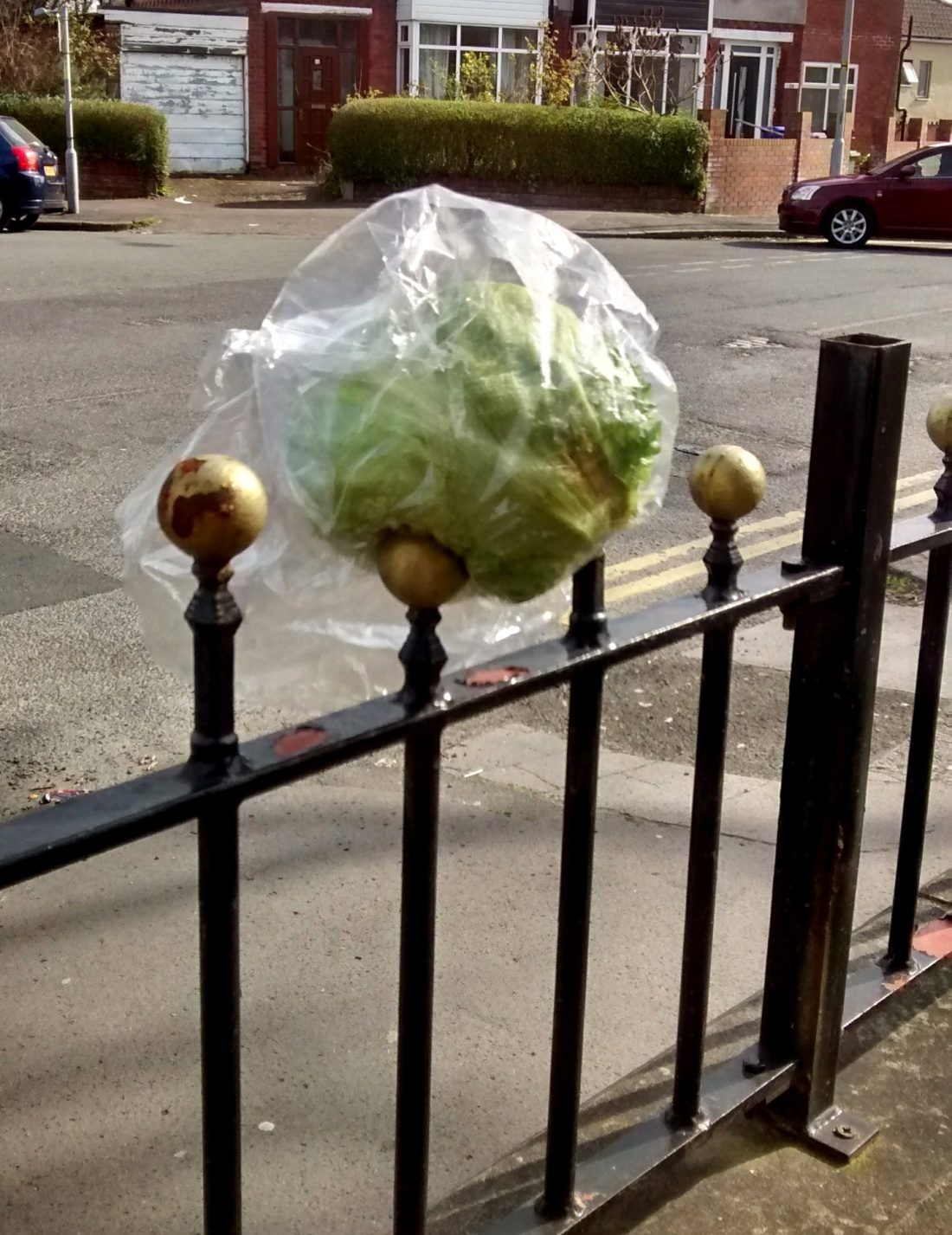 cauliflower fence