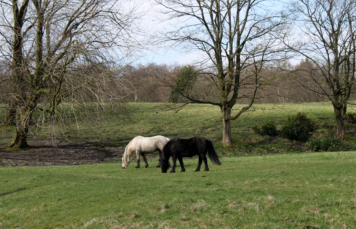 horses heatonpark