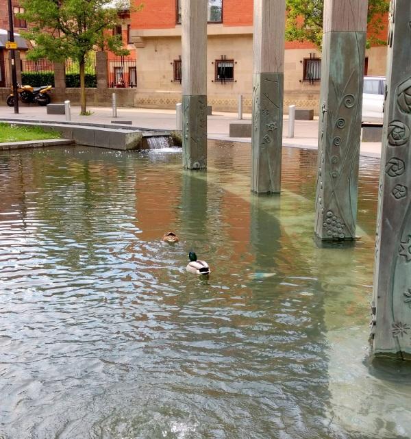 ducks in fountain