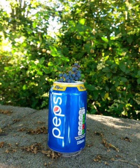 pepsi can and berries