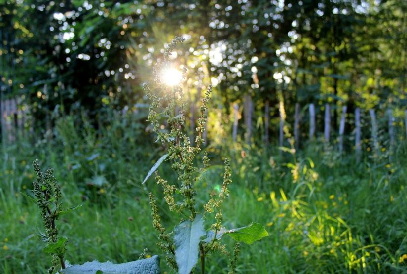 sun in plants