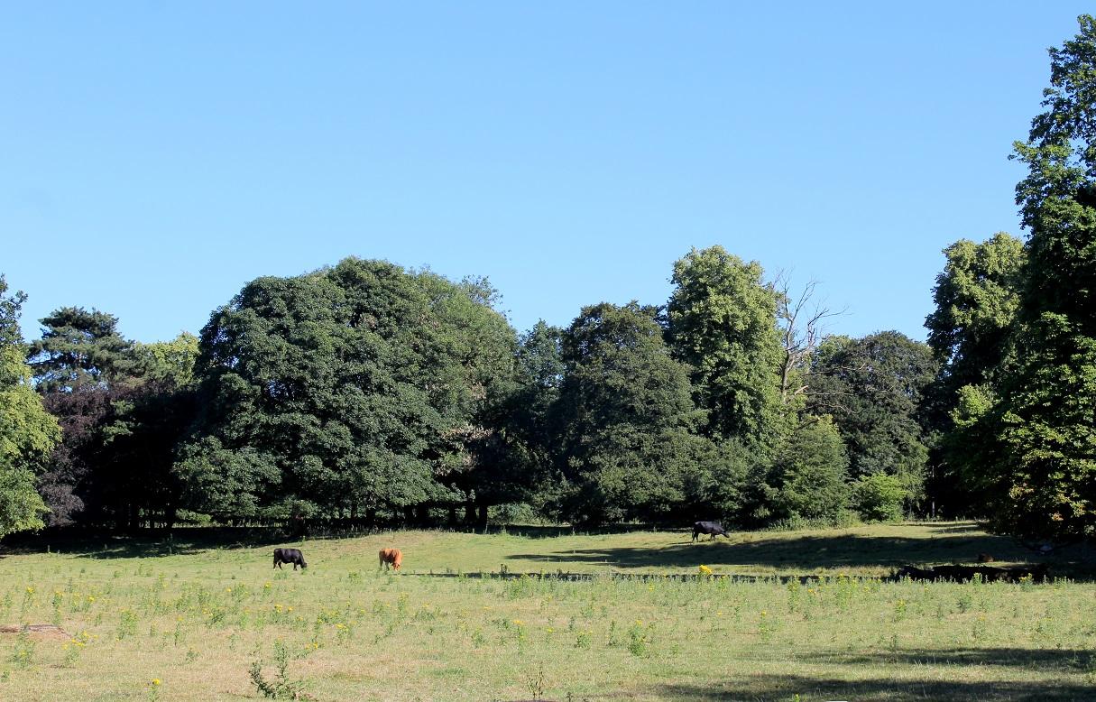 abney park1