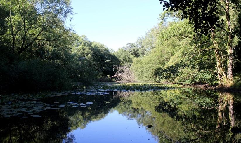 abney park2