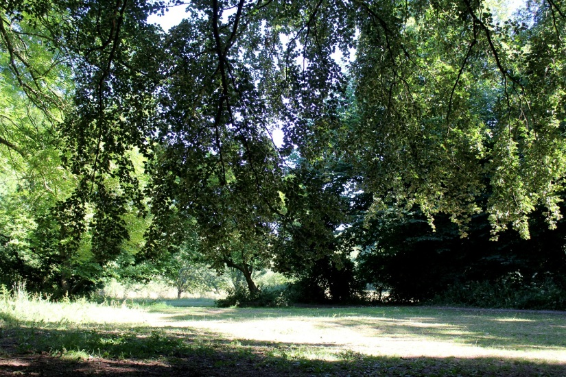 abney park4