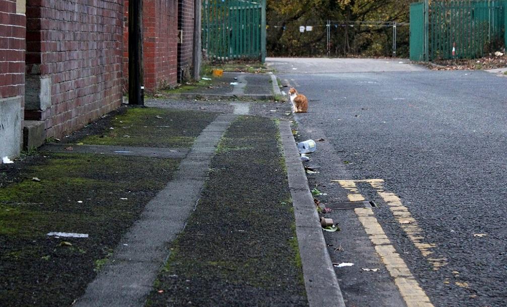 ginger cat in grey2