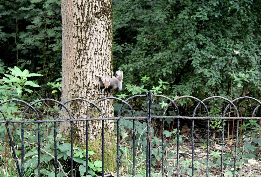 squirrel CITA