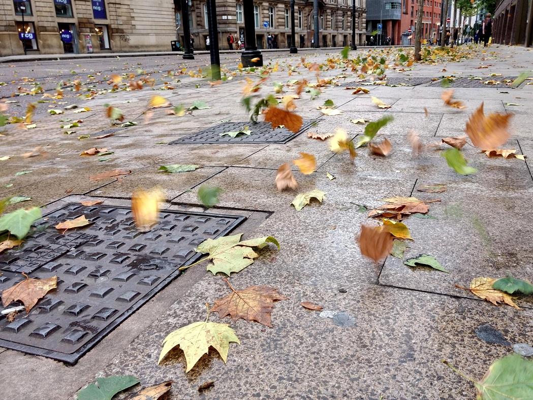 autumn leaves flying