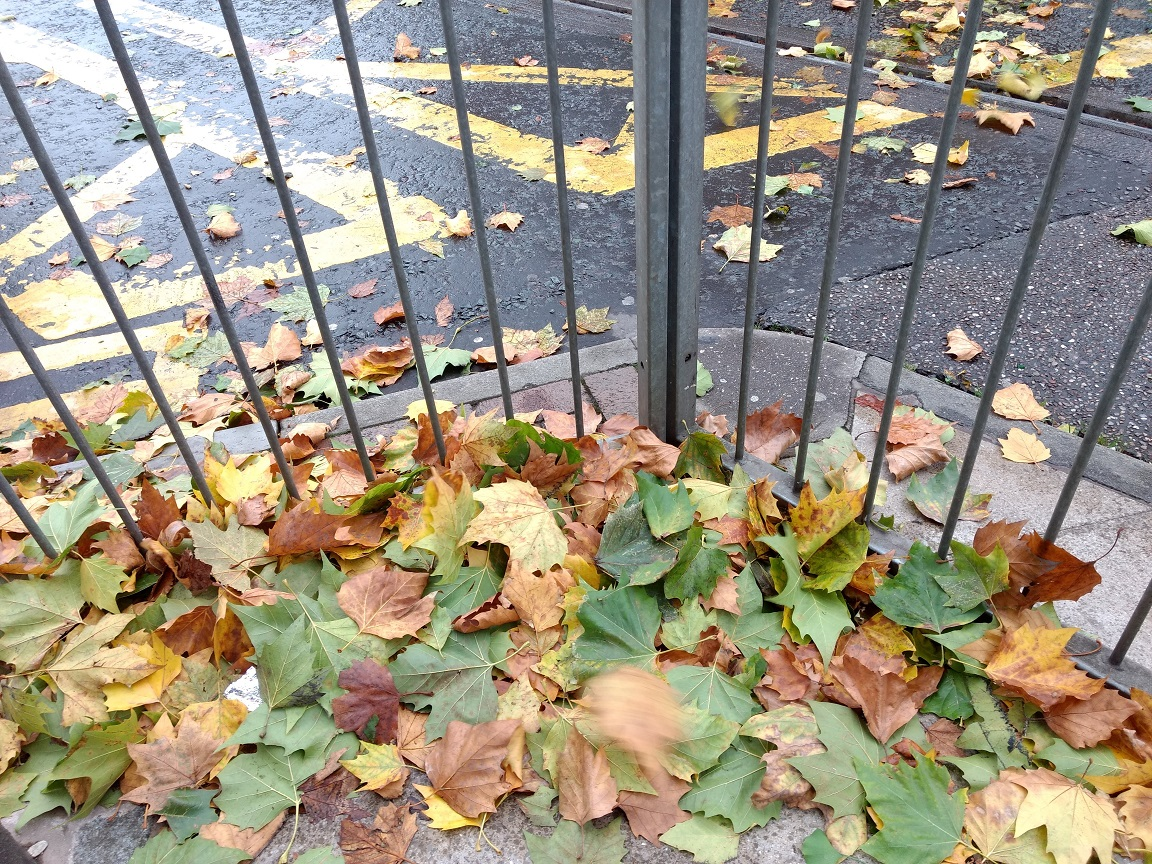 autumn leaves flying2