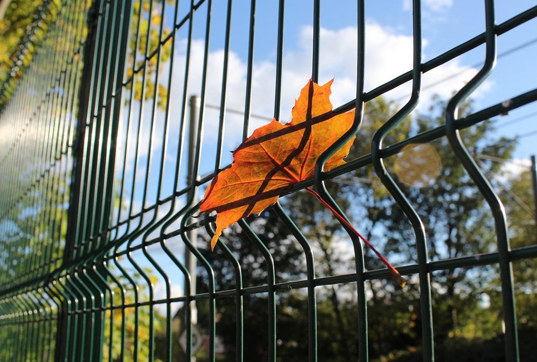 autumn leaves3