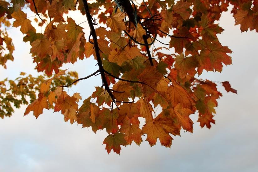 autumn leaves4