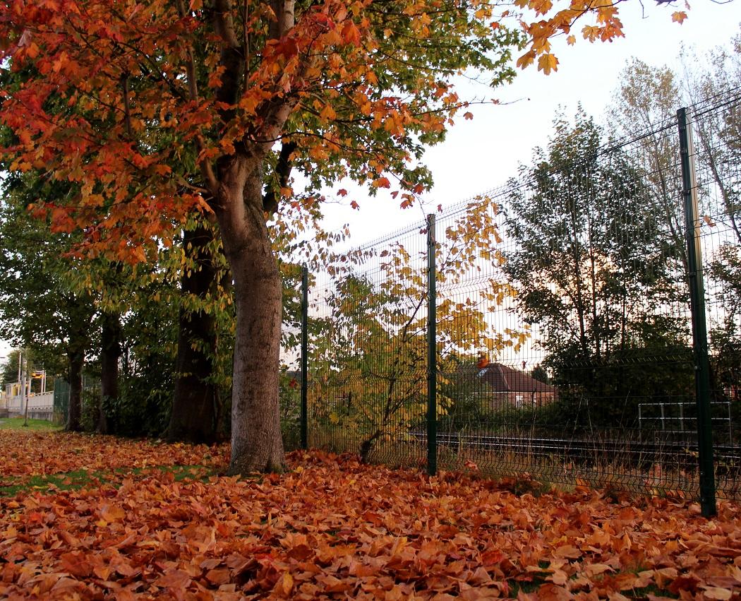autumn leaves7
