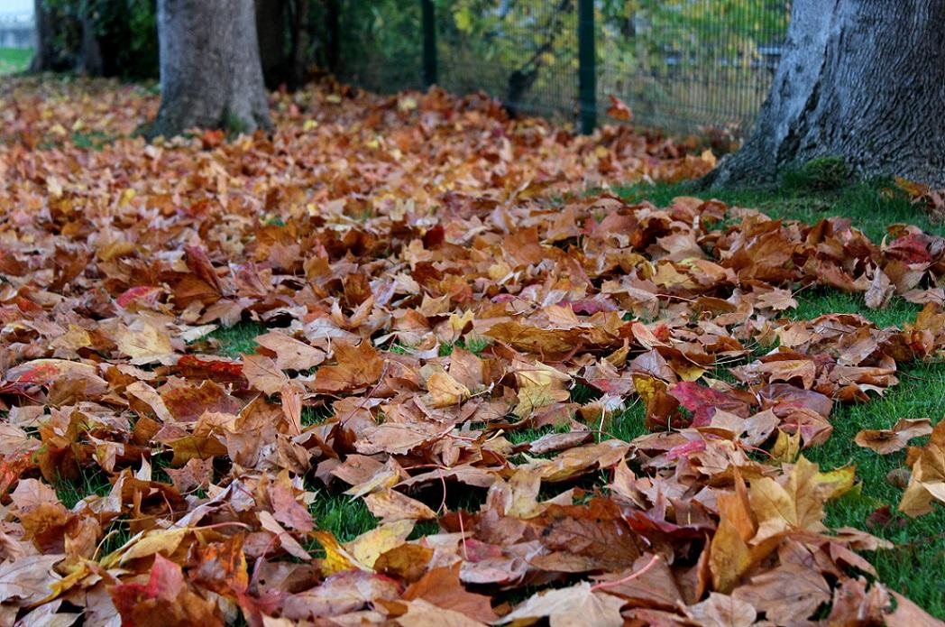autumn leaves8