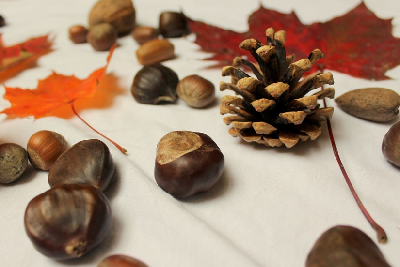 autumnal stilllife1