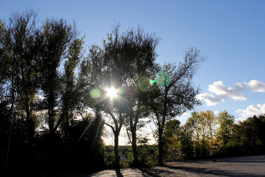sun thru trees1