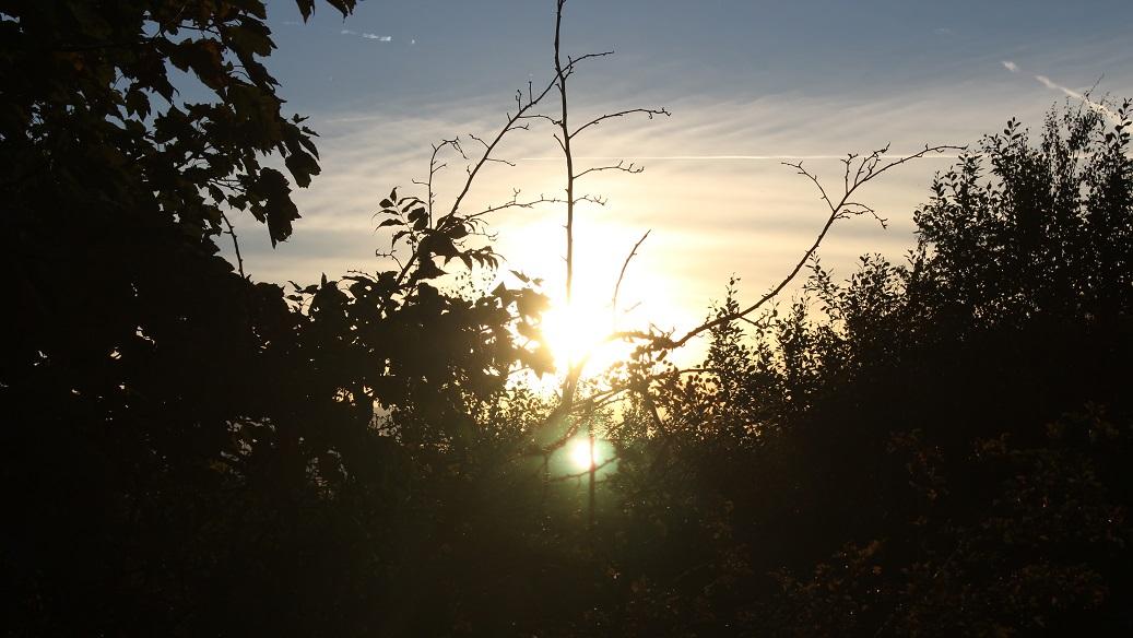 sun thru trees2